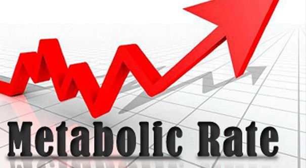 Metabolism rate