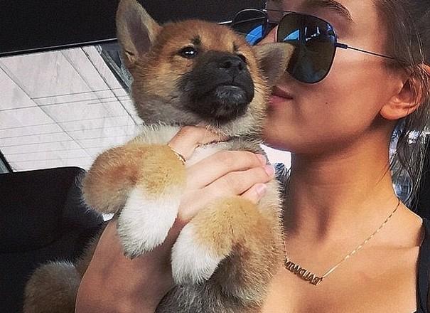 Hailey Baldwin New Pal is a Corgi Dog